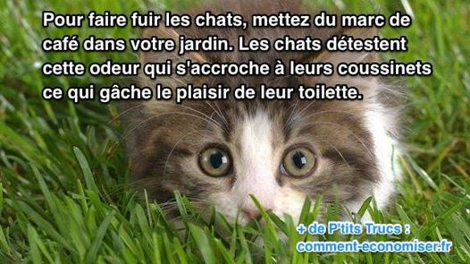 faire fuir un chat
